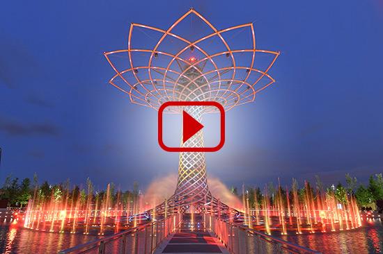 Tree Of Life Video
